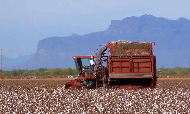 Cotton Pickin' Expansion