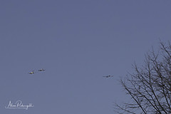 Warbirds Over King George