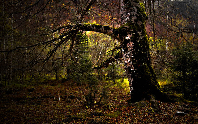 ...en lo profundo del bosque 2