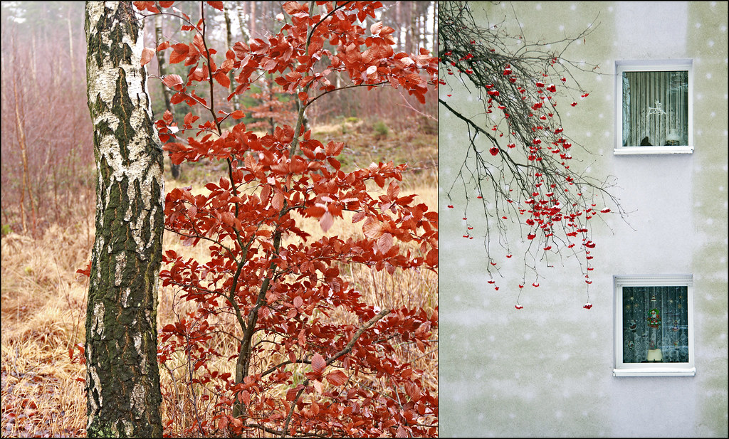 red parts of plants (Manfred Geyer / Ute Kluge)