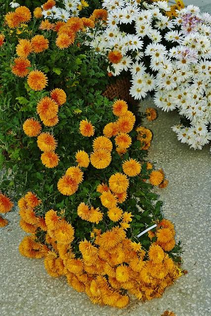 Coulée de fleurs