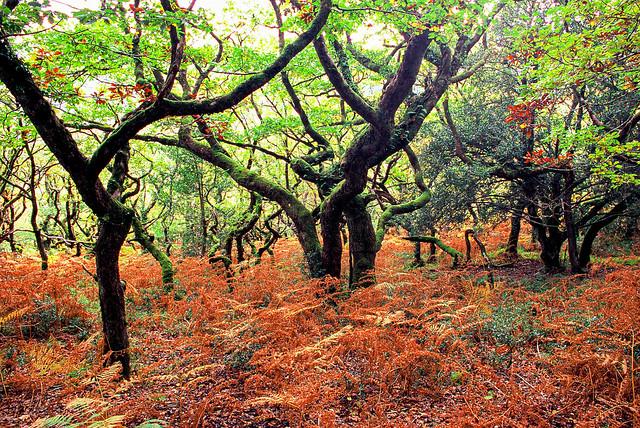 Horner Wood