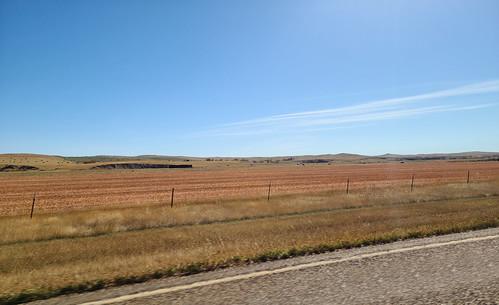 wheatfields harvesttime prairie montana