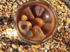 Bird Seed in Crystal Ball 5 by Tricia H C
