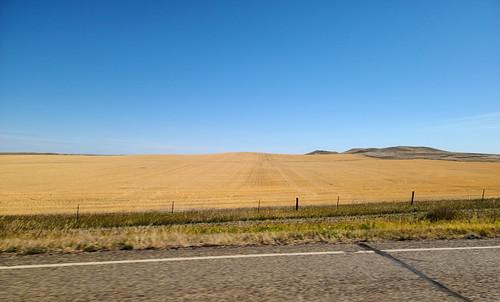 montana wheatfields prairie harvesttime