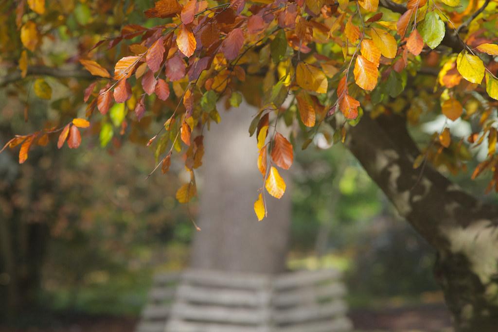 Autumn Tranquility @ SE22