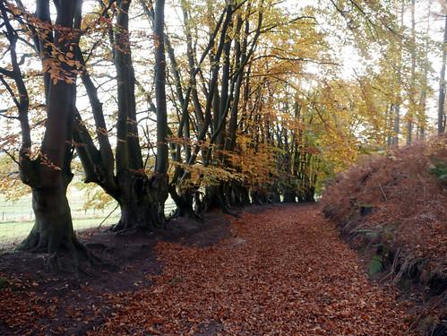 Lee Brockhurst Walk