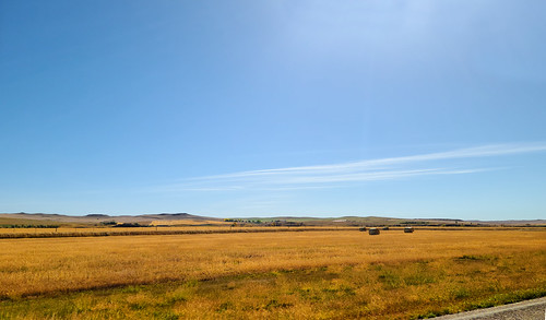 wheatfields prairie harvesttime montana