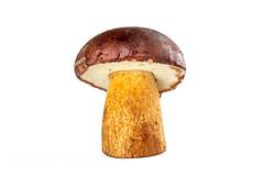 Close-up, boletus mushroom on white background