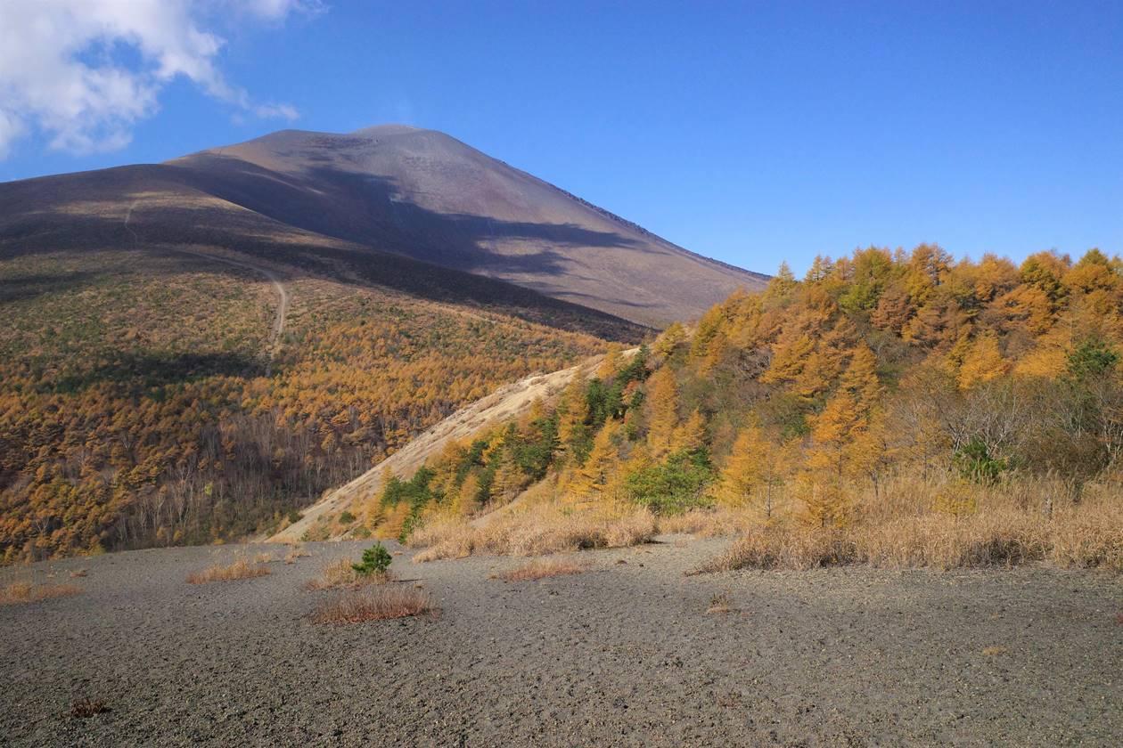 浅間山とカラマツの紅葉