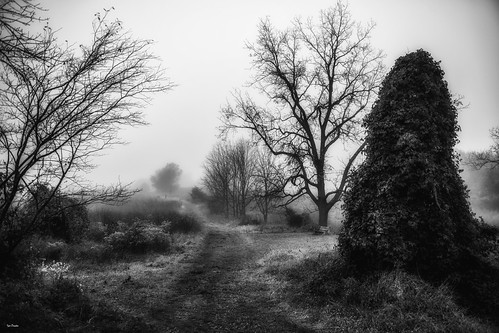 blackandwhite bw mono unknown walk be ready keepers forest fog morning new day path road soft make create your world life enjoy human bright wide open sky nature findit atmosphere ambient aura landscape nikon d850 nikon2470mmf28g