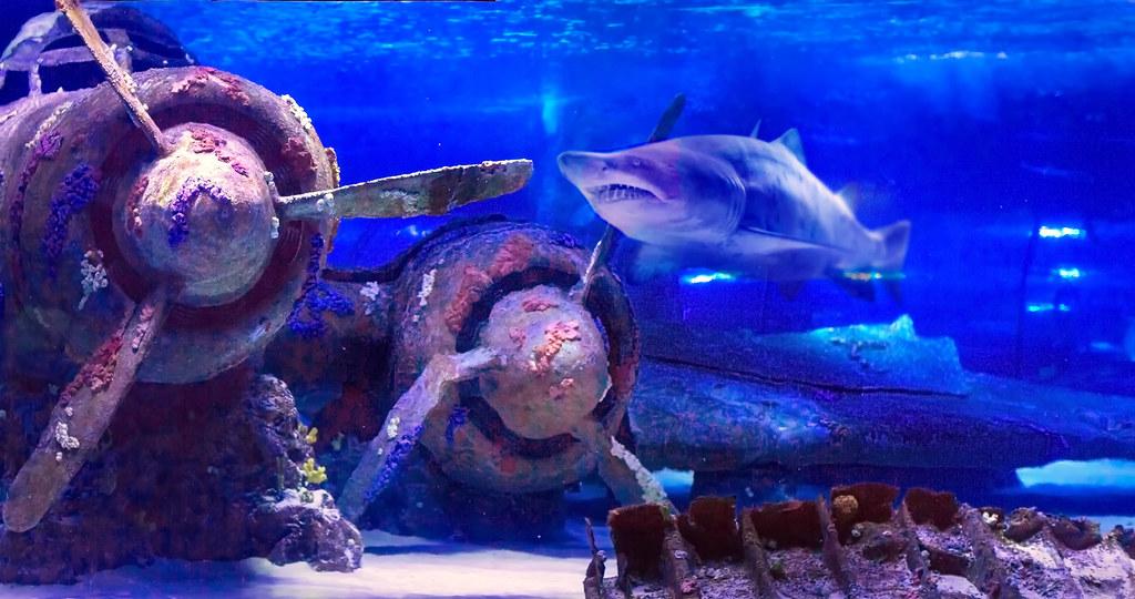 Plane under water in Antalya aquarium of Turkey