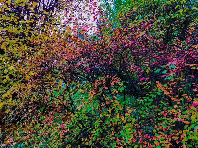 The shrubs of Autumn.