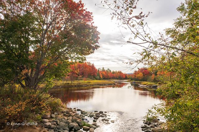 Autumnal splendour 850_0078.jpg