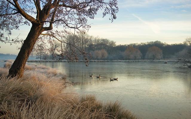 Morning light at Richmond Park