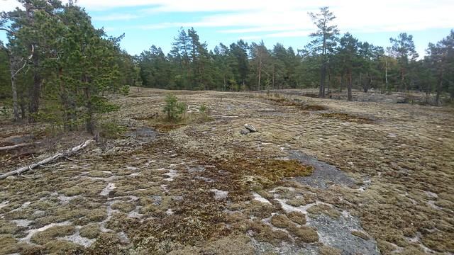 Rock outcrop in southwestern Orslandet (Inkoo, 20200521)