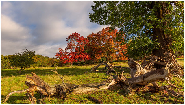 3 colours of Autumn.