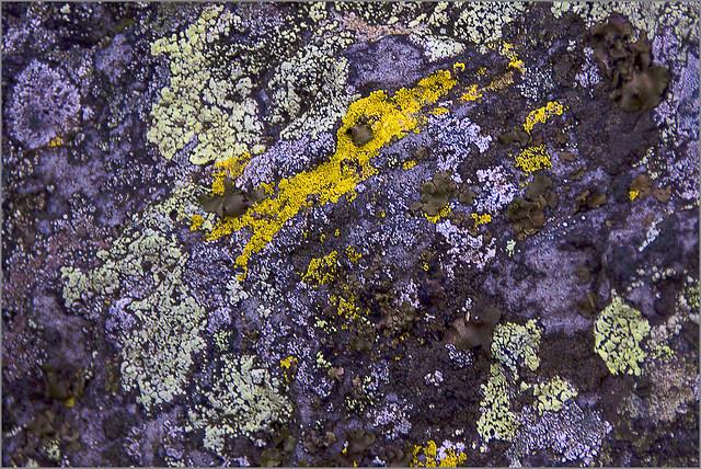 Flechten - Lichens
