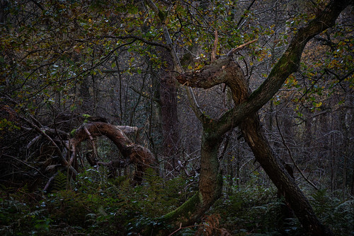 biddulphgrangecountrypark dragon snake hissingsid spooky forest woods friday13th raindrops