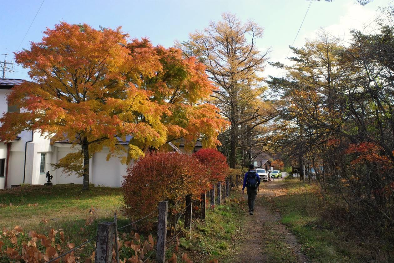 小浅間山登山口の紅葉