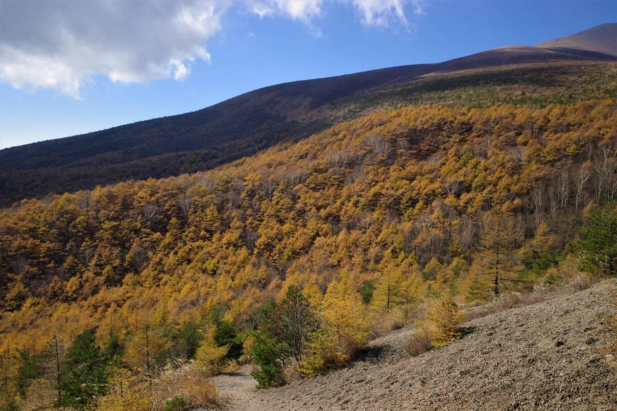落葉松の紅葉風景