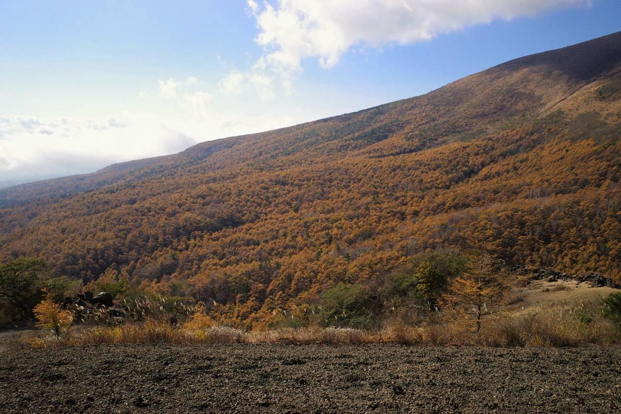 浅間山を黄色く染めるカラマツの紅葉