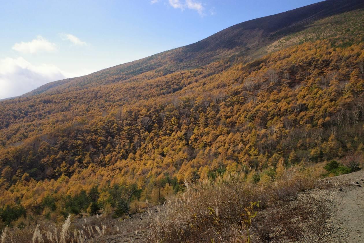 小浅間山登山 落葉松の紅葉