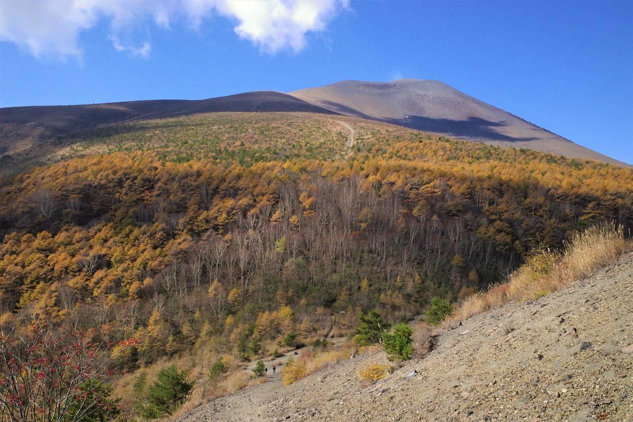【軽井沢】小浅間山から眺める浅間山とカラマツの紅葉風景