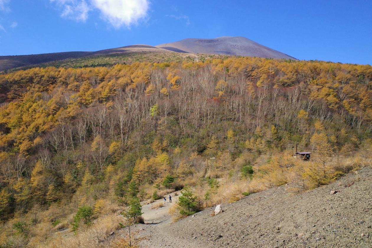 小浅間山登山道から眺める浅間山と落葉松の紅葉