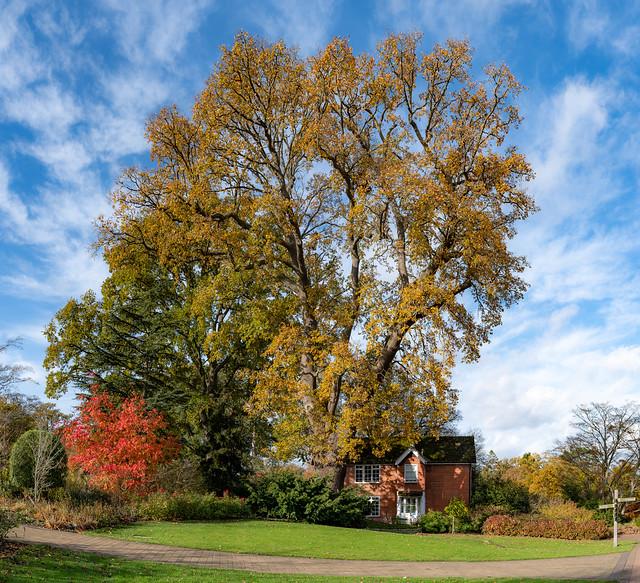 Autumn Leaves, RHS Wisley, 12 November 2020 (28)-Pano