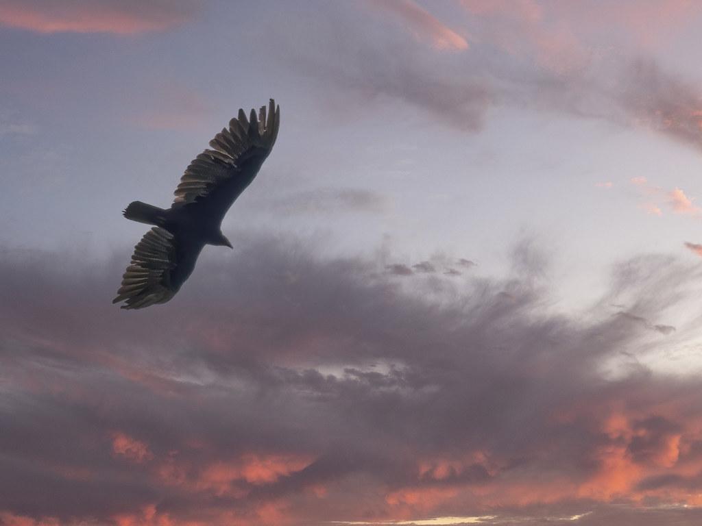 Vol au dessus de la Fortuna... 50597018018_e71af9cbf6_b