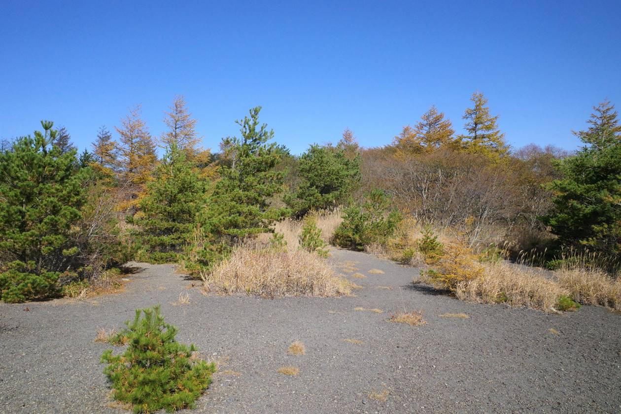 小浅間山山頂から森の奥へ