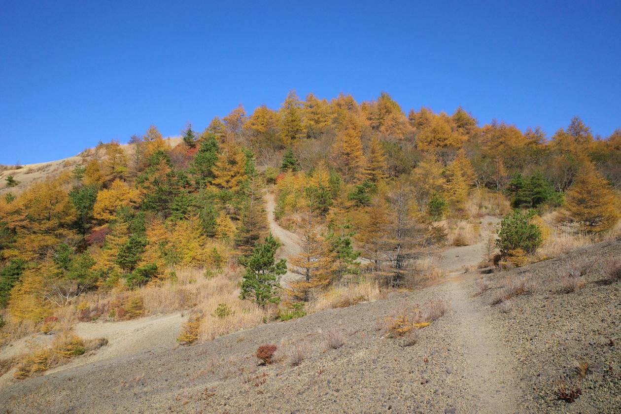 小浅間山の落葉松の紅葉