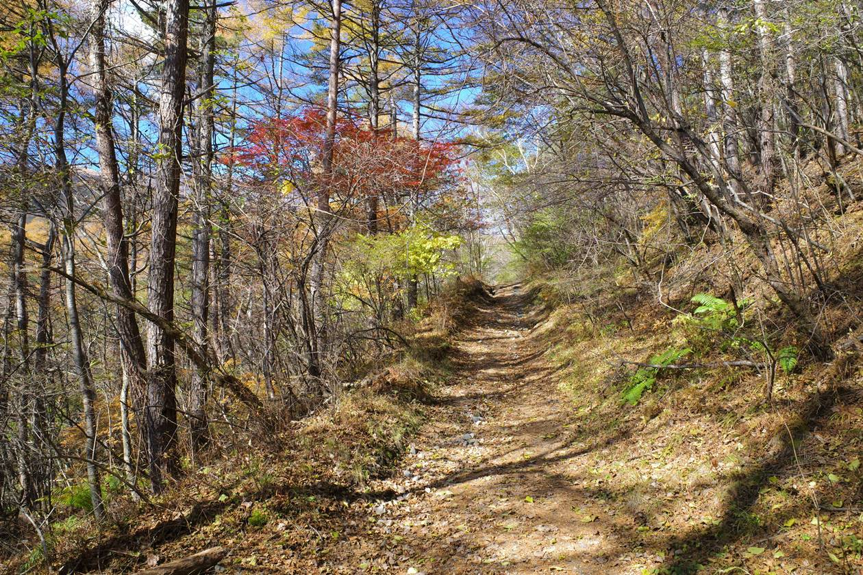 小浅間山 平坦な登山道