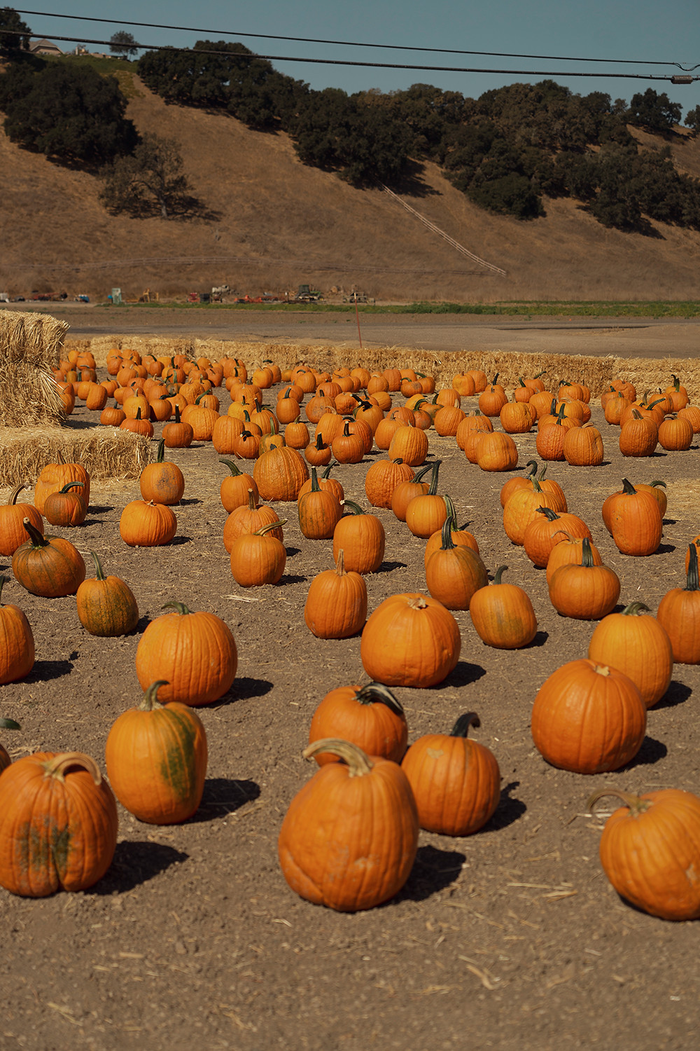 21solvang-pumpkinpatch-california-roadtrip-travel