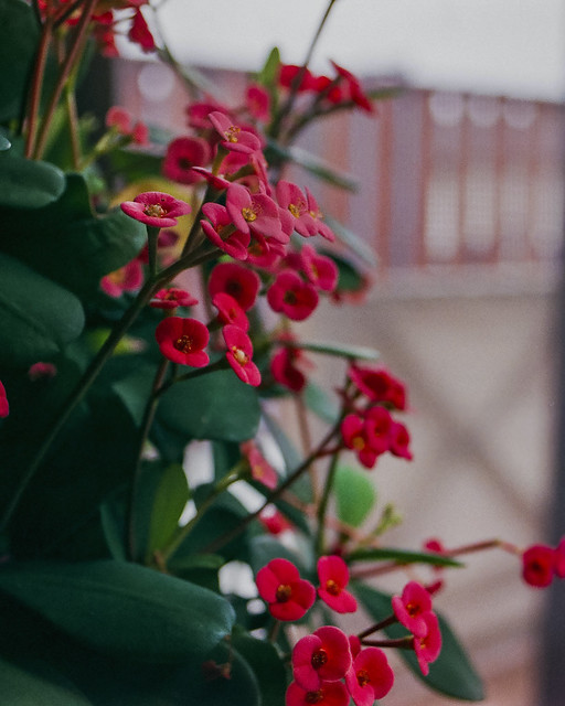 Olympus OM2n 35mm Film