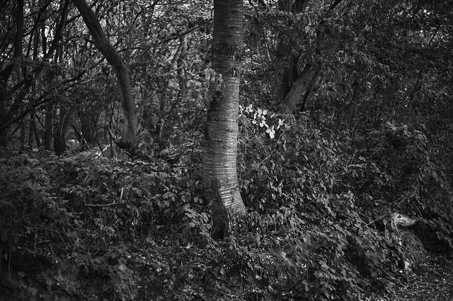 late autumn @ walking path 13