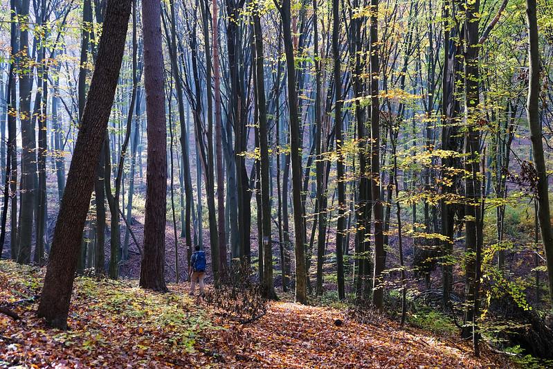 Zemplén Mountains, Hungary