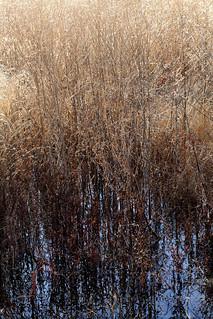 GRASSY REFLECTIONS