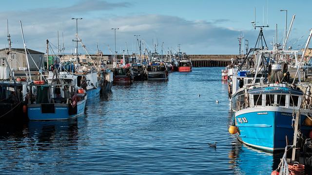 Broch Harbour 41