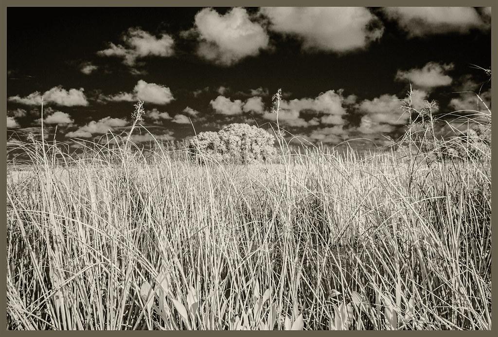 Lake Woodruff IR #5 2020; Oaks & Cattails