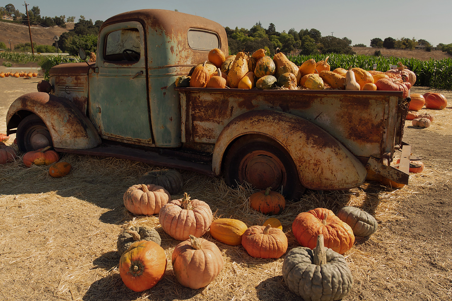 23solvang-pumpkinpatch-california-roadtrip-travel