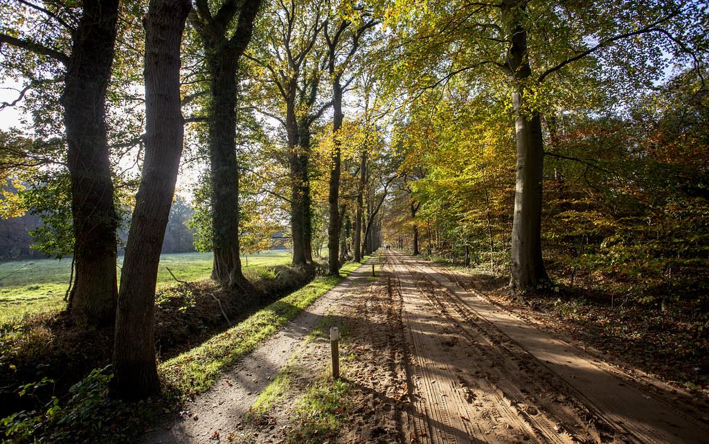 Pollseweg