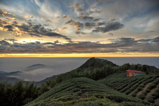 大崙山茶園 夕陽