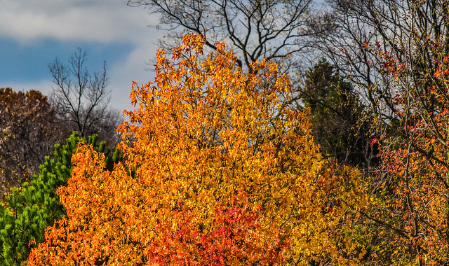 OMFD Fall Trees