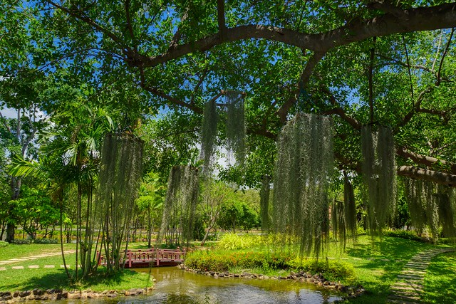 Tree and pond in Muang Boran (Ancient City) open air museum in Samut Prakan near Bangkok, Thailand