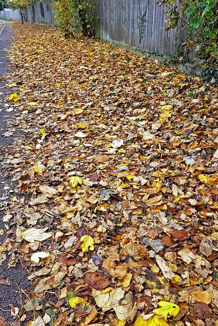 Autumn_Leaves_2011_Toton
