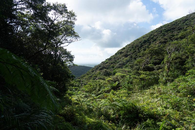 於茂登岳の登山道