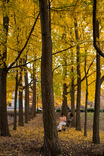 Ginkgo Allee | by thoth1618