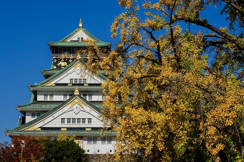 Osaka Castle and Gingko trees